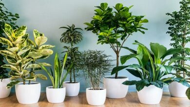 Photo of 5 Varieties Of Indoor Plants That Are More Than Just Home Decors