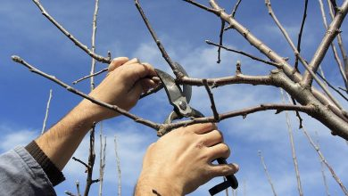 Photo of All You Need To Learn About The Services Of Tree  Pruning In Long Beach