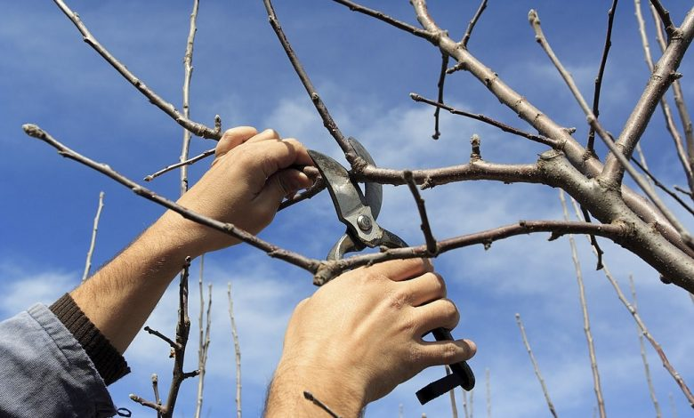 cutting-redundant-branch-of-a-tree-in-spring