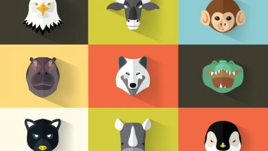 Photo of 5 free animal flat icons tips for using graphics in e-learning.