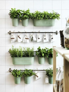 Add Aromatic Plants Refresh Your Kitchen