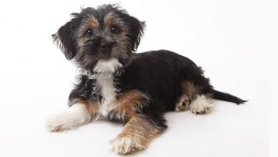 Photo of What do I need to know about terrier-mix
