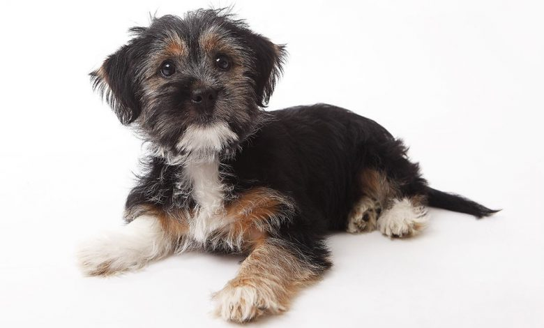 What do I need to know about terrier-mix